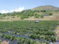 Kavurucu sıcakların Malatya'yı terk etmesi bekleniyor