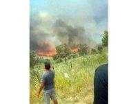 Tekirdağ'da korkutan yangın: 100 dönüm zeytinlik alan cayır cayır yandı