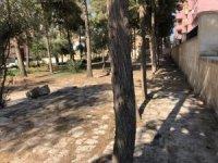 Kızıltepe Belediyesi çöplüğe dönen Ulu Cami bahçesini temizledi