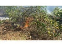 Düzce'de orman yangını: 4 hektar alan kül oldu