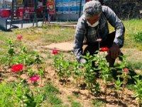 Çaldıran Belediyesi ilçeyi çiçeklerle süslüyor