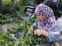Türkiye'de sadece Bilecik'te yetişiyor