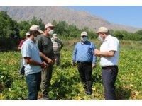 Erzincan'da kuru fasulye üretimi artıyor