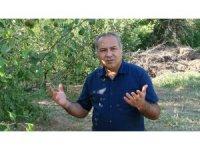 ESOGÜ'de meyve hasadı dönemi sona erdi