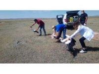 Kars'ta 3 leylek ve 3 kızıl tilki ortamlarına bırakıldı