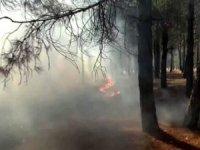 Dikkatsizlik nedeniyle birçok bölgede orman yangını meydana geldi.