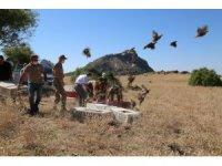Tunceli'de bin adet keklik doğaya salındı