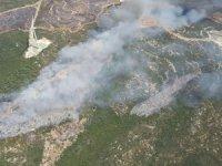 Edremit'te zeytinlik alanda yangın