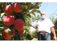 Covid-19'dan dolayı Karaman'da üretilen 400 bin ton elmanın yüzde 70'i dalında satıldı