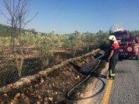 Muğla'da çöplük ve zeytinlik yangınları söndürüldü