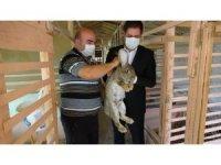 MHP'li Bulut 'Velikan' cinsi tavşanların üretim yapıldığı çiftliği gezerek bilgi aldı