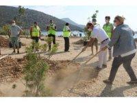 Bodrum'da sahiller ağaçlandırılıyor