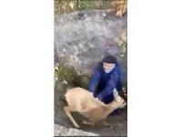 Rusya'da çukura düşen karacayı yaşlı çift kurtardı