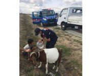 Genç çobanın yardımına jandarma ağabeyleri koştu