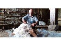 Osmancık'ta koyunların güz kırkımı başladı
