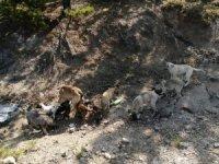 Çevre ilçe ve beldelerden toplanan sokak köpekleri Doğanlar köyüne bırakılıyor