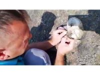 Ağzına olta takılan martıyı Edremit Belediyesi personeli kurtardı