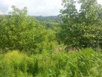 Ceviz ağacından düşen adam hayatını kaybetti