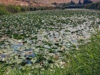 Nilüfer Gölü koruma altına alınmayı bekliyor