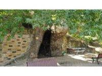 812 yıllık çınara büyükşehirden koruma