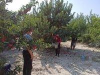 Eğirdir'de 20 bin elma işçisi için pandemi denetimleri artırıldı
