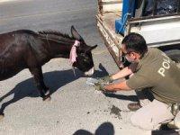 Kamyonete bağlanarak sürüklenen eşeği polis kurtardı