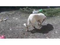 Tellere sıkışan köpek itfaiye ekiplerince kurtarıldı
