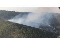 İzmir'de ormanlık alanda yangın paniği