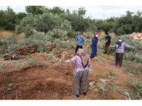Antalya'da 42 zeytin ağacı inşaat çalışması için katledildi