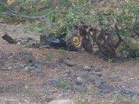 Traktör ormana yuvarlandı: 1 ölü, 2 yaralı