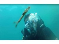 Van Gölü'nde tespit edilen yeni canlı türü görüntülendi