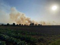 Sakarya'da anız yangını dumanları şehri kapladı