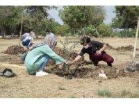 Mersin Büyükşehir Belediyesi, üniversiteyi kazanan gençler için zeytin fidanı dikti