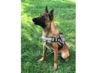 """Bingöl polisi yetiştirdi, patlayıcı bulmada uzman köpek """"Tokyo"""" göreve başladı"""