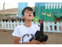 Horozlarla atışıyor, tavuklar onu horoz sanıyor