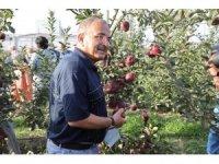 ODÜ meyve bahçesinde hasat şenliği