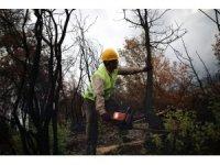 Orman yangınının izleri siliniyor