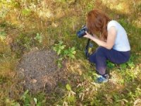 Avrupa'nın kanunla koruduğu karıncanın yuvaları tek tek tespit ediliyor