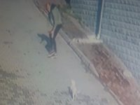 Köpeği önce sevdi, sonra kaçırdı, o ânlar güvenlik kameralarına yansıdı