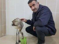 Yaralı flamingo tedavi altına alındı