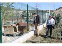 Sokak hayvanları kısırlaştırılarak rehabilite edilecek