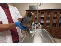 Bitkin bulunan sakarmeke kuşu tedavisinin ardından doğaya salındı