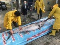 """Marmara Denizi açıklarında dev """"Kılıç Balığı"""" yakalandı"""