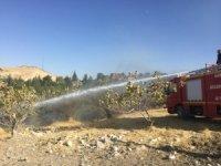 Fıstık bağındaki yangında onlarca ağaç hasar gördü