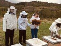 Vali Aktaş, kestane balı hasat sağımına katıldı