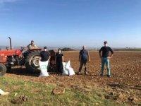 Vize'de yerli yulaf demonstrasyonu kuruluyor