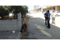 İki kız kardeş sokakta başıboş gezen keçiyi iple bağladıktan sonra polisi aradı