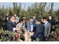 DAP ve DAKA'dan Ahlat'taki elma yetiştiricilerine destek