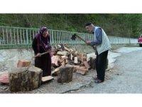 Yaşlı çift kışlık odun ihtiyaçlarını kendileri karşılıyor