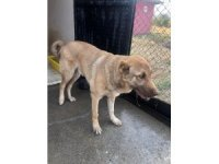 Bingöl'de arka ayakları aksayan köpeğe belediye sahip çıktı